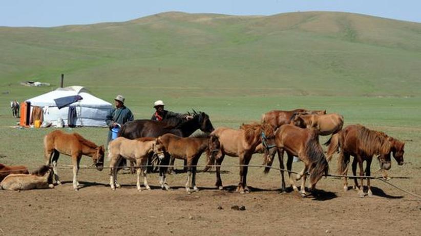 Pferdezucht in Mongolei: Szene aus der Mongolei, aufgenommen vor wenigen Wochen: Zwei Hirten machen sich bereit, ihre Pferde zu melken.