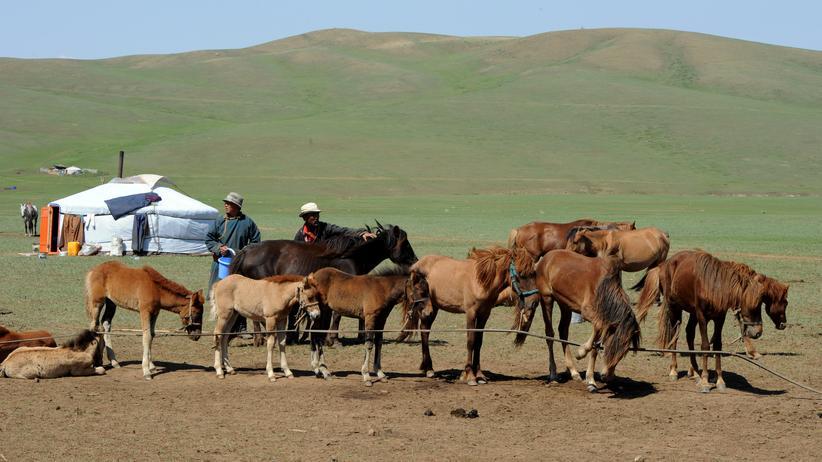 """Pferdezucht in Mongolei: """"Keinen Wodka trinken, aber hart arbeiten"""""""