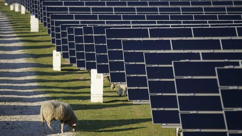 Erneuerbare Energien: Was kann die Politik jetzt tun?