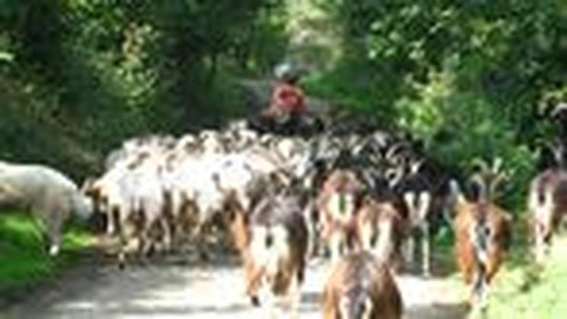 Landwirtschaft: Bauer werden für besseres Essen