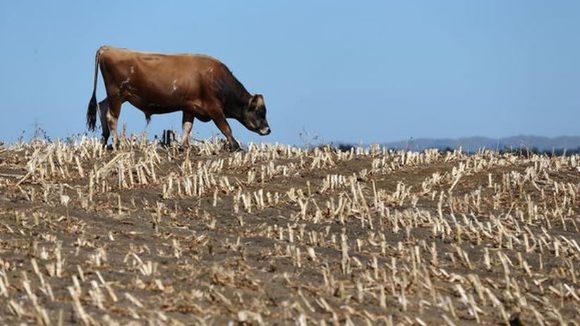 Welternährung: Große Versprechen, magere Ernten