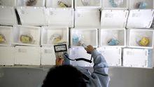 Fische, die nahe Fukushima gefangen wurden, werden auf radioaktive Belastung untersucht.