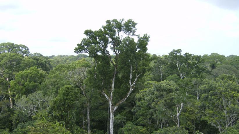 Waldinvestments: Dubiose Geschäfte mit dem Waldschutz
