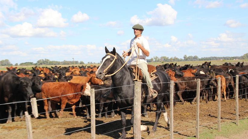 Der Gaucho Arata