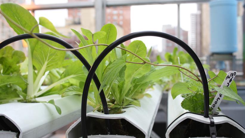 Die Pflanzen sollen möglichst ohne Erde auskommen