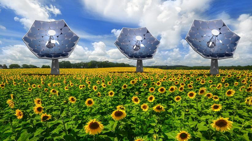 Solar: Die Super-Solar-Sonnenblume