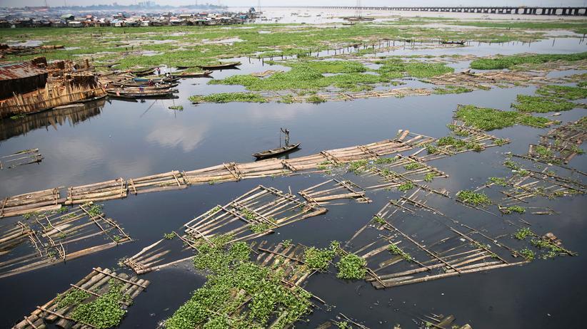 Nigeria: Afrikas Regenwald wird zu Feuerholz