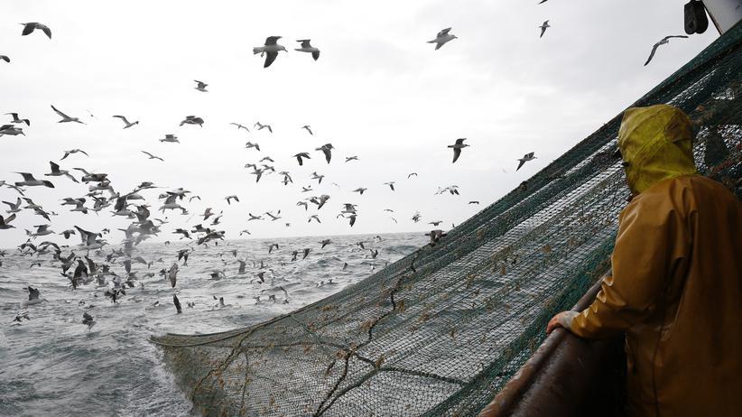 Überfischung: Track die Piratenfischer