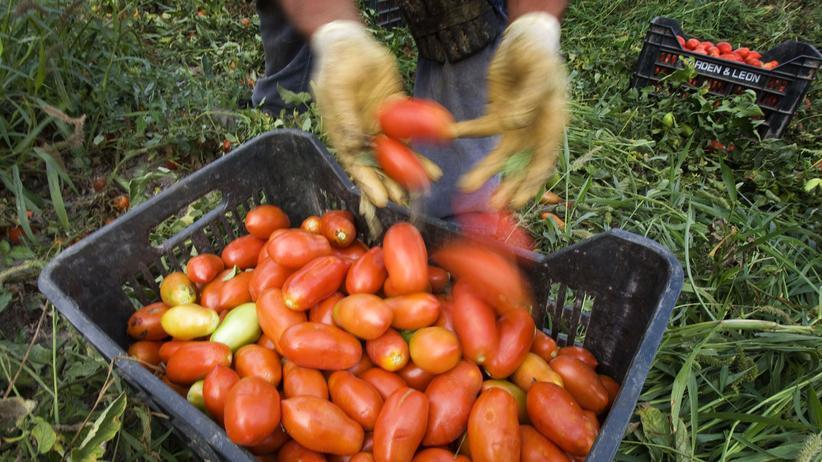 Italien: Tomaten
