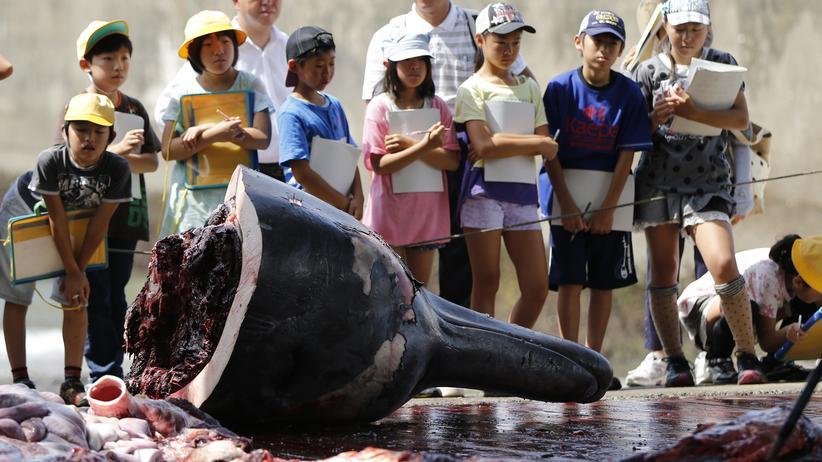 Arktis: Walfleisch für Japan