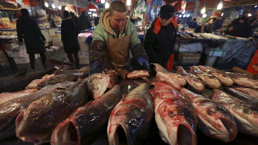Wirtschaft, China, China, Überfischung, Antarktis, Westafrika, Fischerei