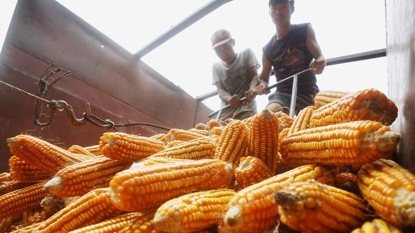 TTIP und TPP: Ein Maisproduzent in Vietnam. Das Land ist nun Mitglied im TPP-Handelsverbund mit den USA.