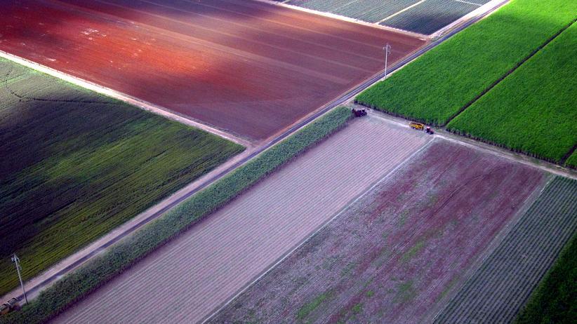 USA: Zuckerrohranbau in Australien – das Land profitiert vom neuen Handelsabkommen TPP