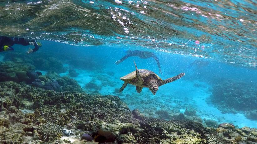"Korallenriff: ""Dann heißt es: Game Over"""