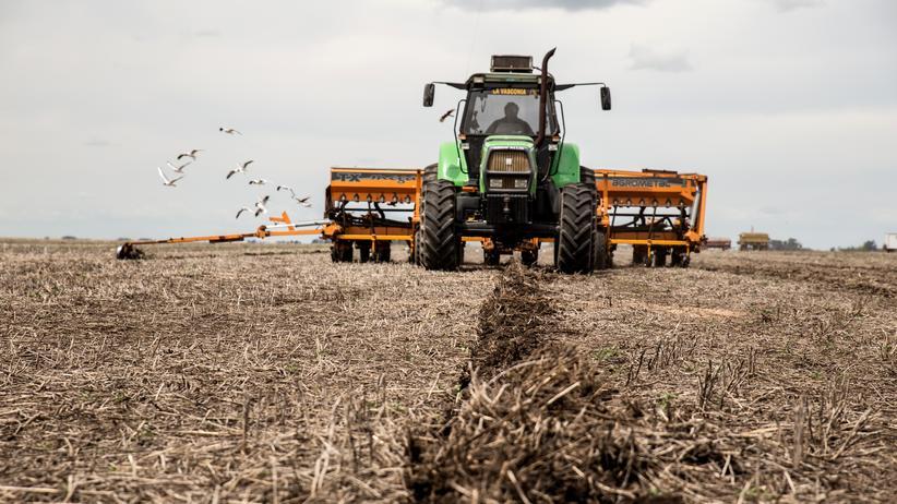 Per Direktsaat wird in Argentinien Mais angepflanzt.