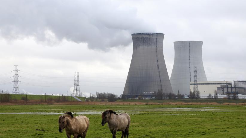 Atomkraftwerke: Pferde grasen vor den Kühltürmen des Kernkraftwerks Doel in der Nähe von Antwerpen.