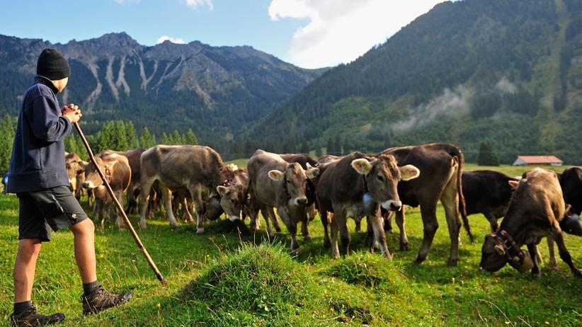 Landwirtschaft: Mindestens 100 Millionen Euro Soforthilfe für Milchbauern