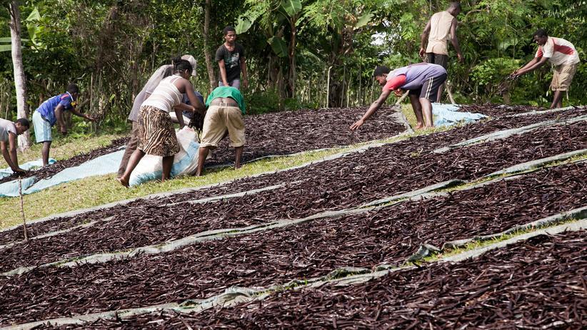Gewürzanbau: So kam die Vanille nach Madagaskar