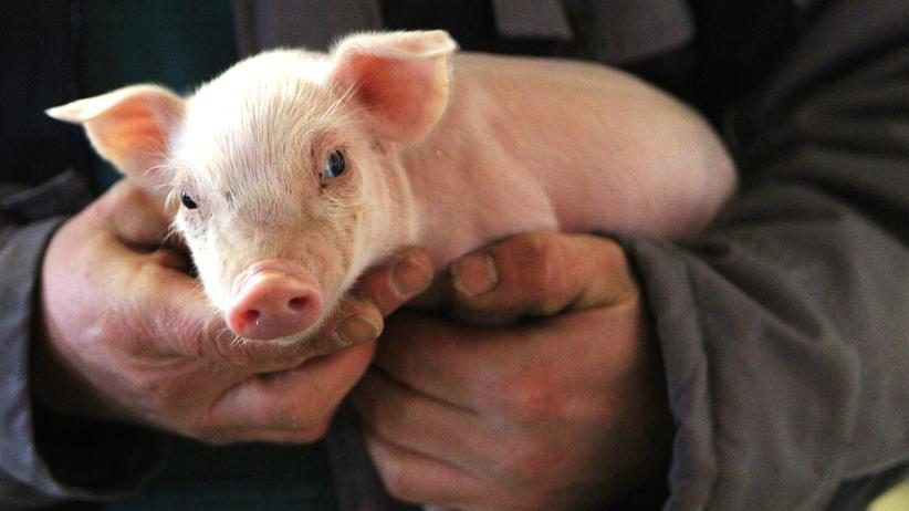 """Ökologie: """"Die Standards für Tierhaltung und Fütterung kontinuierlich weiter anheben."""""""