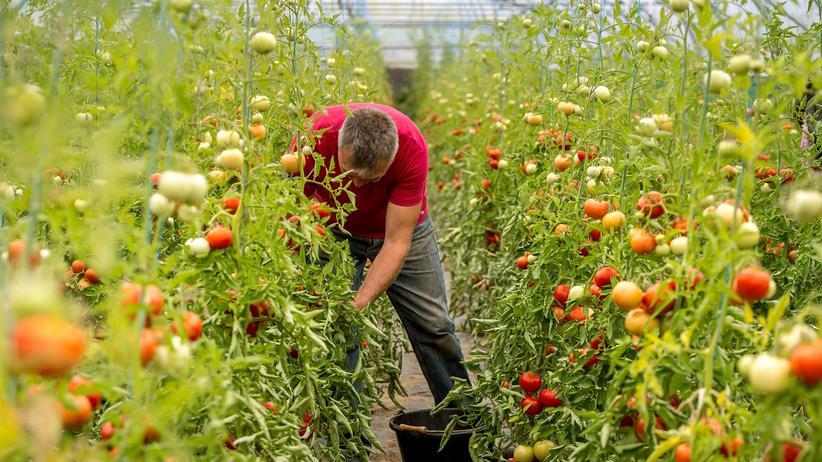 Geldanlage: Den Standort finden, den Boden bearbeiten, passende Pflanzen wählen, hegen und pflegen: So funktioniert Öko-Landbau, hier zu sehen in Frankreich – so funktioniert auch die nachhaltige Geldanlage.