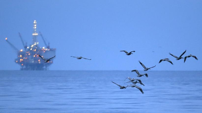 UN-Klimakonferenz: Mit Öl bedeckte Vögel vor einer Bohrplattform in Kalifornien. Vor zwei Jahren brach dort eine Pipeline; an die 80.000 Liter Öl flossen aus und verschmutzten das Meer und die Strände.
