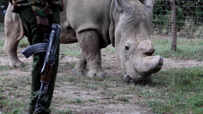 Artenschutz: Falsche Hörner gegen das Schlachten