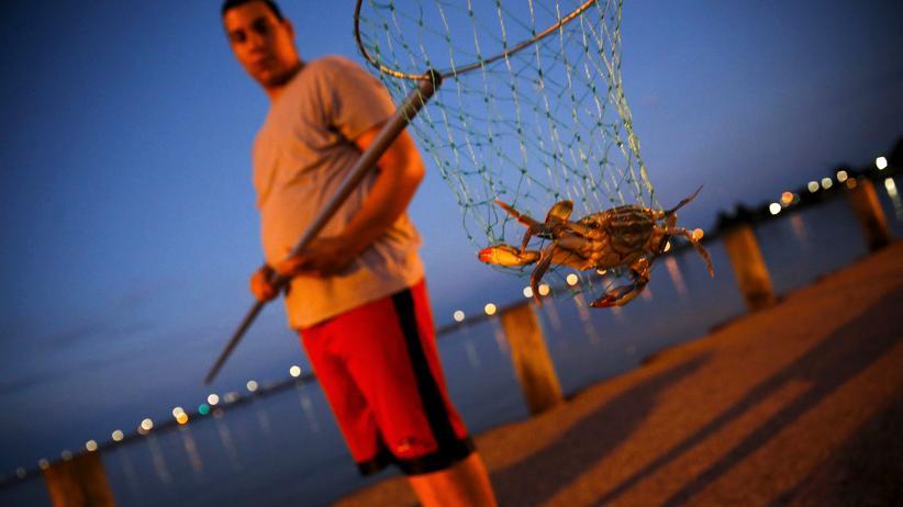 USA: Ein Krabbenfischer in Maryland