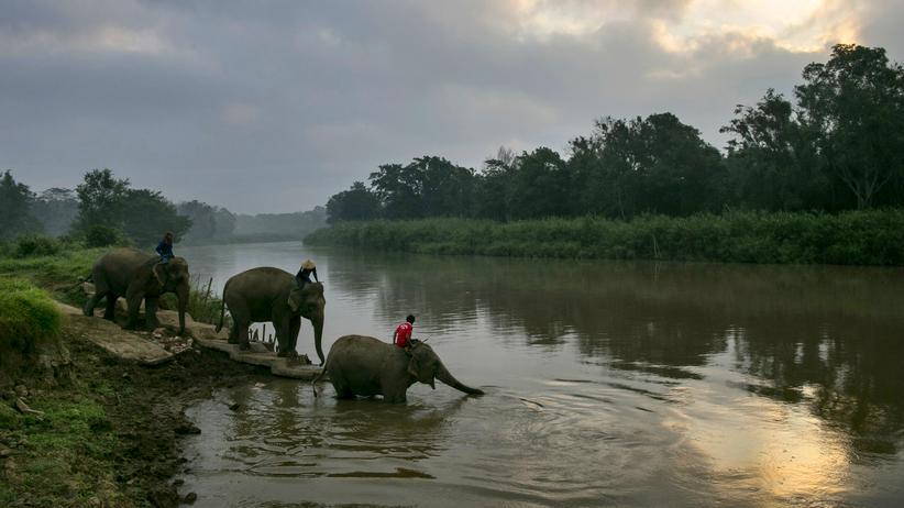 Elefantenreiten: Wie kann man das Leid der Elefanten lindern?