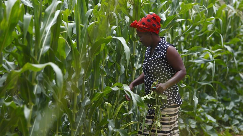 Sambia: Wer profitiert vom Kampf gegen den Hunger?