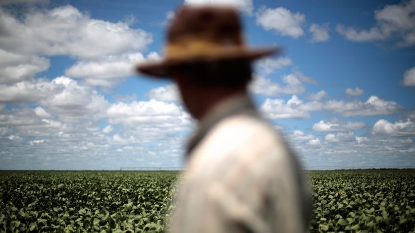 China und Lateinamerika: Soja-Anbau in Brasilien. Chinas eigene Ressourcen reichen dem Land schon lange nicht mehr.