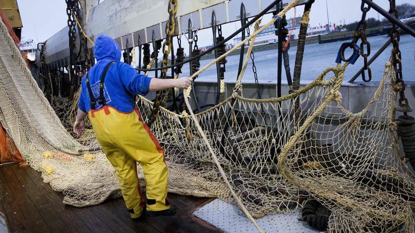 Elektrofischerei: Nordsee unter Strom