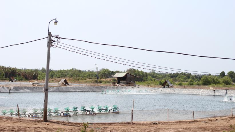 Vietnam: Eine Garnelenfarm
