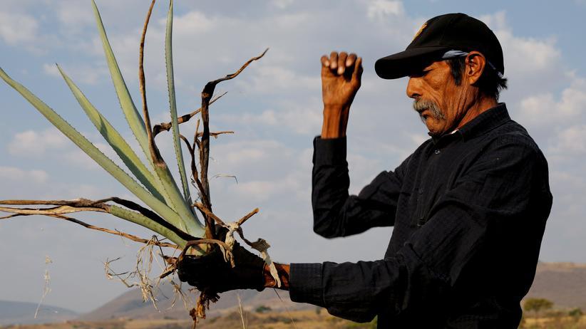"""Mexiko: """"Ohne uns gibt es keinen Tequila"""""""