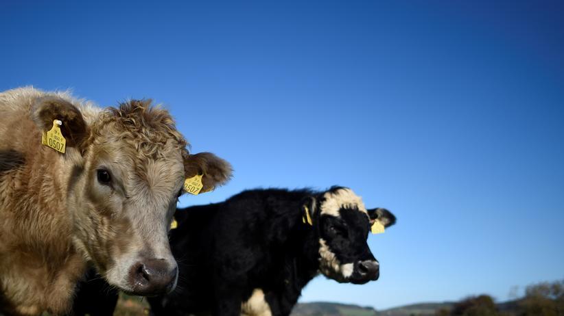 Agrarpolitik: Europa braucht nicht noch mehr Förder-Millionäre
