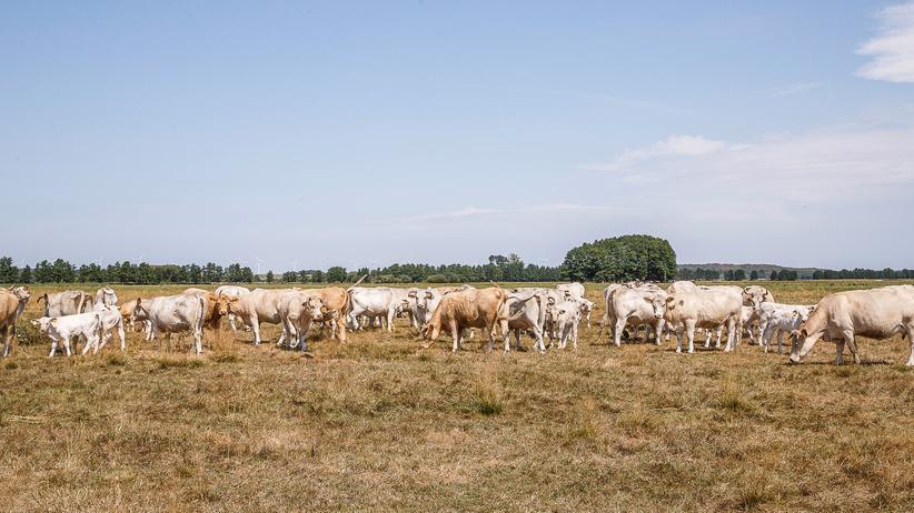 Landwirte: Bereits Tausende Anträge auf Dürrehilfe gestellt