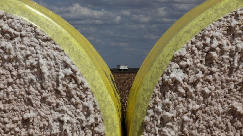 WTO: Baumwolle in Brasilien: Der Welthandel wird in diesem Jahr weniger stark wachsen als erwartet.