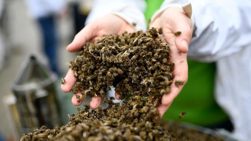 Bayer: Monsanto hat Listen mit Kritikern in sieben Ländern erstellt
