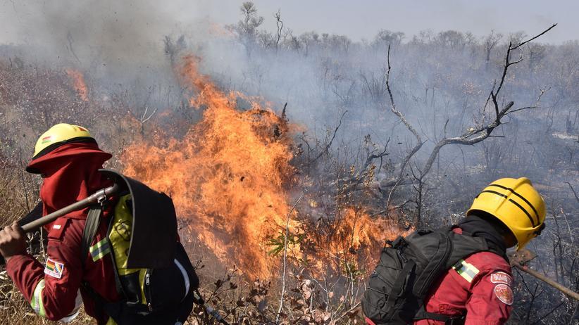 Bolivien: Feuerwehrleute versuchen im bolivianischen Charagua einen Waldbrand zu löschen.