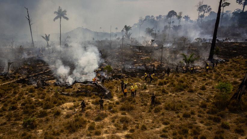 Abholzungen in Brasilien : Vormarsch der Kettensägen