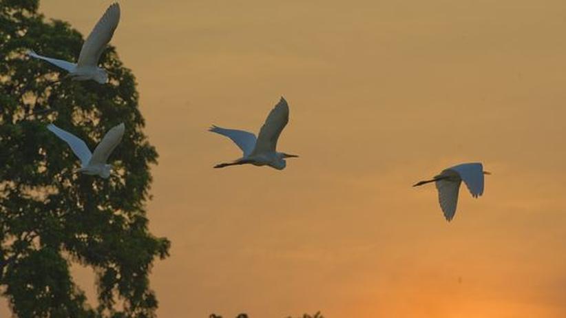 Nachhaltig Investieren: Vögel über dem brasilianischen Amazonas-Regenwald in der Nähe von Manaquiri, 120 Kilometer von Manaus, Brasilien und Hunderte Kilometer vom Jamari Forest entfernt