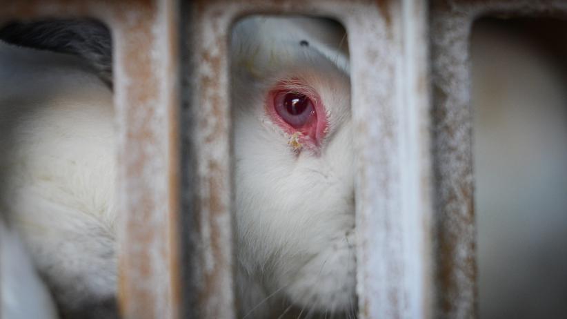 Tierquälerei: Die hässliche Seite der Luxusindustrie