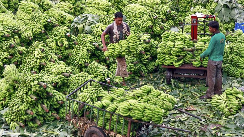 Bananen Ananas Plantagen Menschenrechte Pestizide