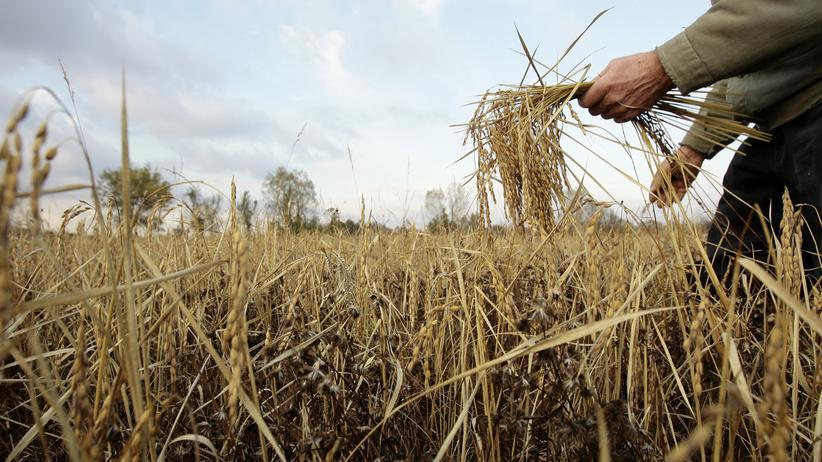 Monsanto: Whistleblower wird mit 22 Millionen Dollar belohnt