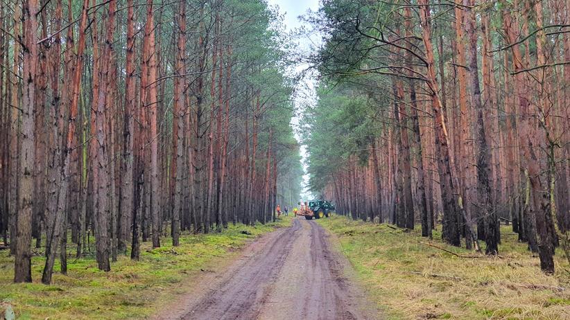Freienbrink: Die letzten Tages des Waldes: Bald sollen hier die Bagger rollen für die neue Tesla-Fabrik.
