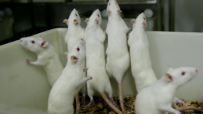 Tierexperimente: Versuch ohne Schmerz