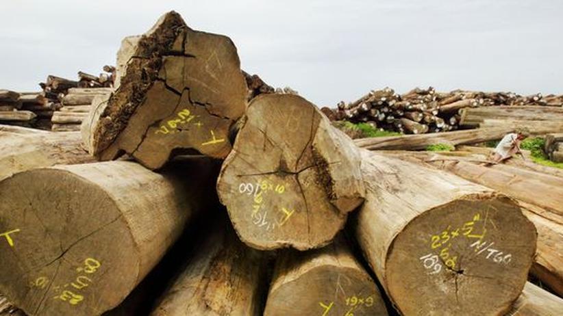 Holz Teak Export Import Baum