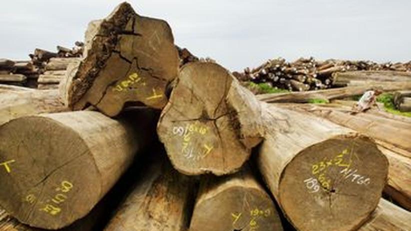 Holzwirtschaft: Astreine Detektive