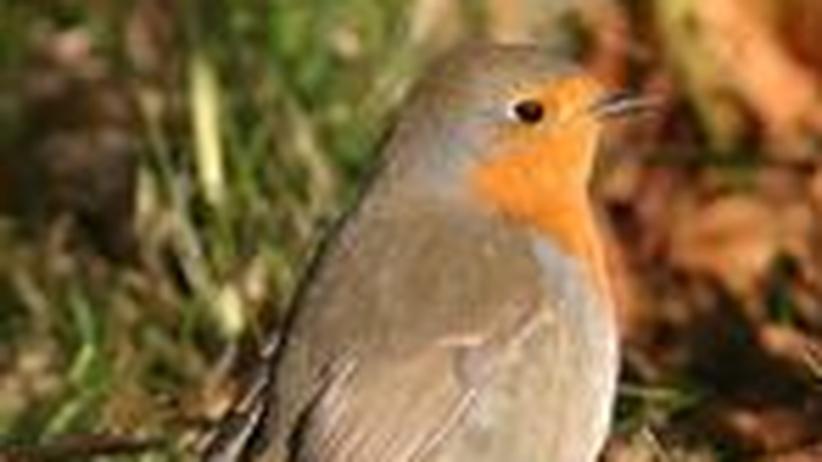 Orientierung der Zugvögel: Augen auf beim Vogelflug