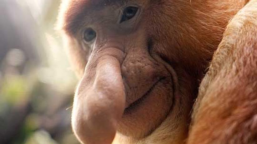 Tiere und Pflanzen: Bedrohte Vielfalt im Dschungel von Borneo