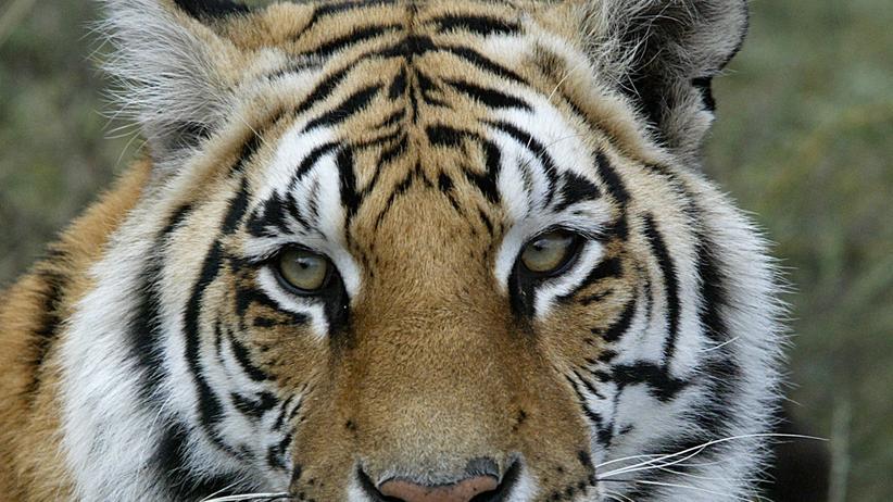Tierschutz: Tiere gehören nicht in den Zirkus